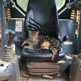 cat sitting in tractor